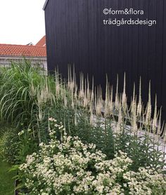 Informative Landscaping Tips And Ideas Night Garden, Moon Garden, Dream Garden, Back Gardens, Outdoor Gardens, Landscape Design, Garden Design, Scandinavian Garden, Natural Garden