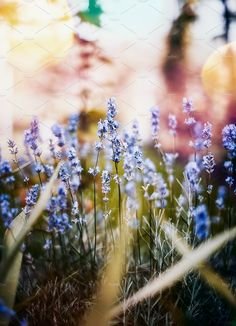 Do you need a gorgeous bit of lavender for your next project? Grab this fantastic stock photo to add a feminine touch to your project. https://crmrkt.com/a3MqK #ad
