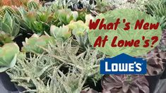 Lowes Shop With Me | Big Box Store House Plant Shopping Big Box Store, Balcony Garden, Container Gardening, Lowes, House Plants, Succulents, Videos, Youtube, Shopping