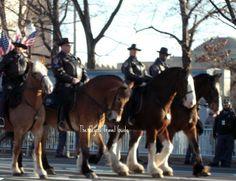US Park Police on Horseback 57th Presidential Inauguration Parade