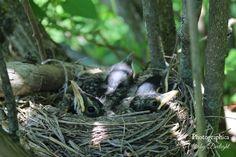 Sweet robins of springtime. Occam's Razor, Robins, Spring Time, Sunday, Sweet, Candy, Domingo, Robin, European Robin