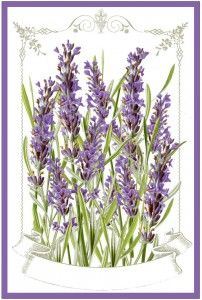 Lavender Labels Printable - The Graphics Fairy