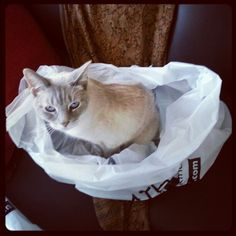He couldn't resist jumping into the bag when I got back from Bed Bath & Beyond.