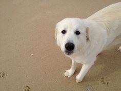 Pip at the beach