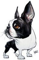 Boston Terrier Caricature by John LaFree