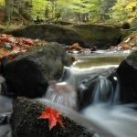 Alleghany State Park, NY. Autumn Stream, Chuck Jaquith. http://nysparks.com/parks/73/details.aspx