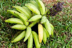 http://www.handfulofrecipes.com/banana-chips-of-kerala-plantain-chips/
