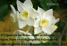 JESÚS PAN YVIDA: LUCAS 12