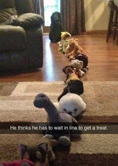 Another Snapchat shows an adorable pet dog waiting in a queue of stuffed toys. It's captio...