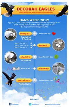 Updated Decorah Eagle Timeline #Ustream #DecorahEagle