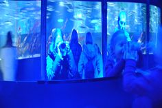 webcam - The World`s Most Visited Video Chat Sacred Architecture, Most Visited, Portrait, Community, Concert, World, Animals, Salzburg, Live