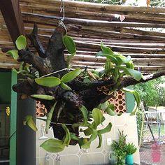 tronco de árvore com orquídeas