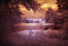 near-infrared-photo-30
