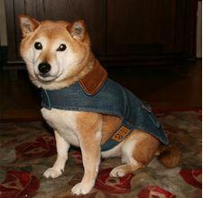 DIY dog vest