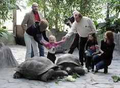 Karel Gott, Turtle, Celebrity, Animals, Turtles, Animales, Animaux, Tortoise, Celebs
