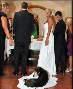 boicoteando la boda.