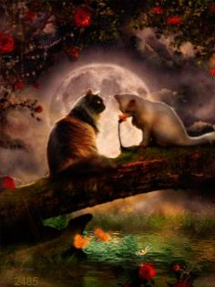 In the light of a silvery moon.a little romance. Gifs, Good Night Cat, Illusion Photos, Animal Magic, Gif Animé, Cool Animations, Cute Creatures, Cat Drawing, Cat Gif