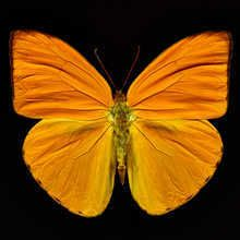 """""""Butterfly IV"""" artwork by Heiko Hellwig. Available in 120 x 120 cm size only Black Backgrounds, Colorful Backgrounds, Minis, Germany Photography, Orange Butterfly, Art For Sale Online, Pictures Online, Magazine Art, New Art"""