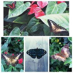 Cait @caitrebecca14 The Butterfly Exh...Instagram photo | Websta (Webstagram)