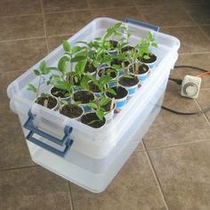 DIY self watering transplant tray. This system will save you a lot of time watering your transplants.