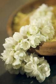 One of the lovely things that you will see in South India - Jasmine Flower Garland