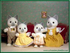 Gray Cat Family