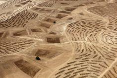 Desert Bloom  Fazal Sheikh