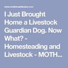 I Just Brought Home a Livestock Guardian Dog. Now What? - Homesteading and Livestock - MOTHER EARTH NEWS