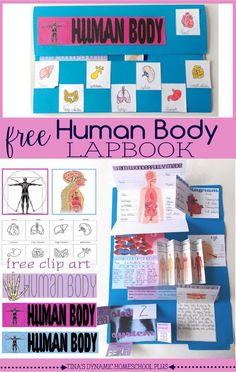 Free Human Body Lapbook and Unit Study. We have had a ton of fun with our unit study and today, I want to give you one more minibook about the eye and some free clip art to go on the outside of the book.  First, did you notice we turned this lapbook landscape?| Tina's Dynamic Homeschool Plus