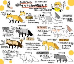 Animation Reference, Red Panda, Furry Art, Mammals, Art Drawings, Character Design, Cute Animals, Creatures, Illustration