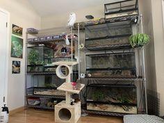 Reptile Shop, Reptile House, Reptile Habitat, Reptile Cage, Reptile Enclosure, Terrariums, Terrarium Reptile, Les Reptiles, Amphibians