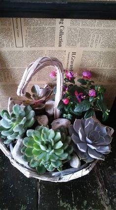 Umbrella with suculents plants Succulents, Flowers, Plants, Succulent Plants, Plant, Royal Icing Flowers, Flower, Florals, Floral
