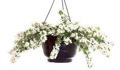 10 kauneinta kesäkukkaa Planter Pots