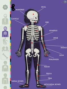 Human Body app for kids - one of our favorite science apps for kids.
