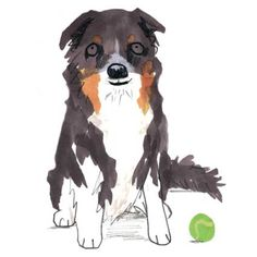 Border Collie - £15.00 : greetings cards, art prints, mugs and unique gifts, by jo clark design