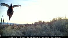 Not just a flying pheasant, but some deer as well in this great image! Big Buck Pictures, Great Pictures, Trail Camera, Cedar Hill, Camera Reviews, Mossy Oak, Bow Hunting, Browning, Pheasant