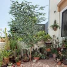 Downsizing a Garden - Phoenix Home & Garden