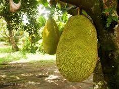 Resultado de imagem para exotic fruit