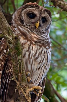 Scott Simmons shares a sad owl story. Beautiful photos with hope for the future too!