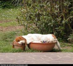 Nap requirement: two pots
