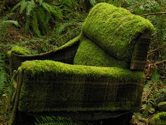 mt macdonald moss chair by robinnestridge, via Flickr