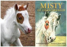 Gentle Carousel Miniature Therapy Horses have their own little Misty! And besides the same names they have the same markings! How cute!