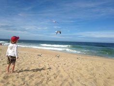 Seagulls. OBX Kids. Sarah C