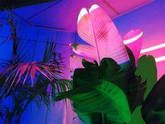 Neon Flashback - urbanbaddies:   ⛓⛓⛓