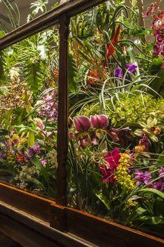 Azuma Makoto for Hermès #plants in the window shop