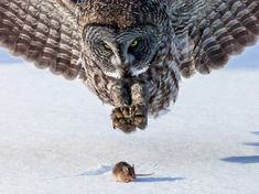 Mind-Blowing Animal Pictures
