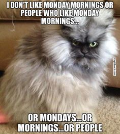 I DON'T LIKE MONDAY MORNINGS OR PEOPLE WHO LIKE MONDAY MORNINGS... OR MONDAYS...OR MORNINGS...OR PEOPLE - Pissed off cat | Pegitboard Meme G...