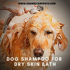 Can I Use Benadryl Cream On My Dog Dogskin Coconut Oil For