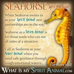 Seahorse Symbolism & Meaning