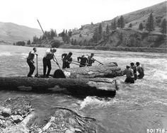 """River Pigs"" fight the foam of Clearwater River, to work a huge white pine log off the shoals in 1961."